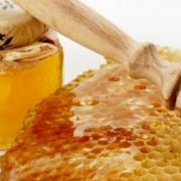 Včelka medonosná a náš společný život – přednáška (část 1)