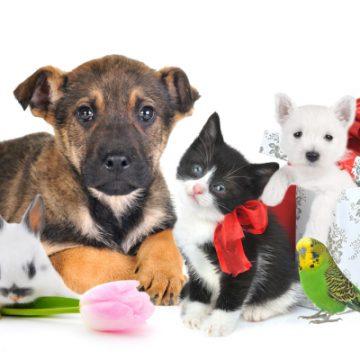 Výběr a péče o naše mazlíčky, pejsky i kočičky